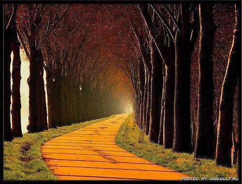 晚安!人生最累的時候,並不是最苦的時候,而是在剛開始起步,看不到目標的時候。