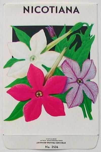 Recent Stock Seed Packet, Nicotiana, #2536