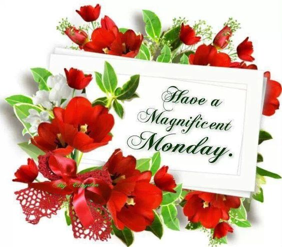 Have A Magnificent Monday monday monday quotes happy monday monday quote happy monday quotes