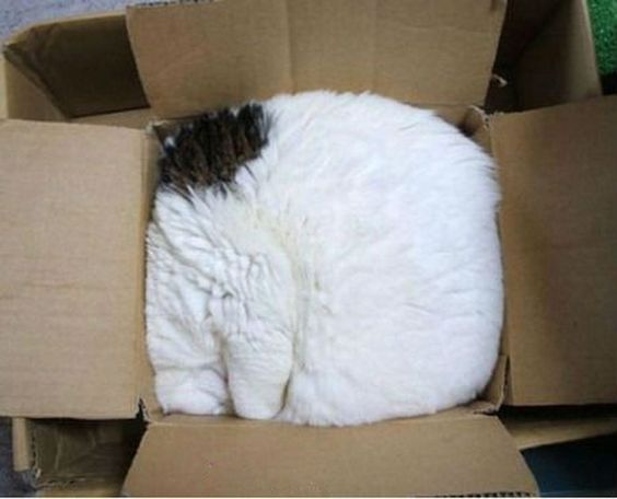 Cat Box, so typical! If my head's hidden, obviously (?) you can't see me!