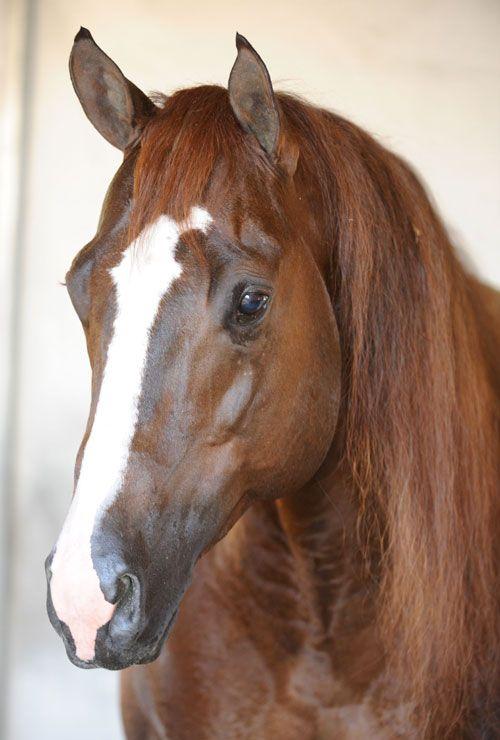 Cromology       (Custom Crome x Miss Masota Blair)      2005 Sorrel AQHA Stallion