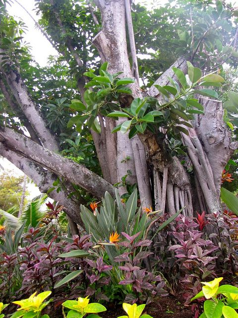 Hawaii Slanted House Design: Hawaii, Plants And