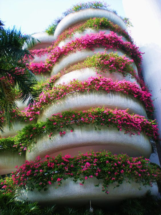 Great flower display on balcony of this apartment complex for Best flowers for apartment balcony
