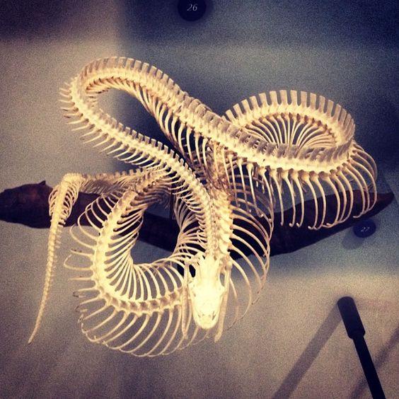 Python skeleton via @mondegro