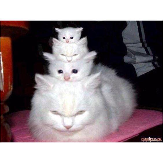 Russian dolls... Meow!