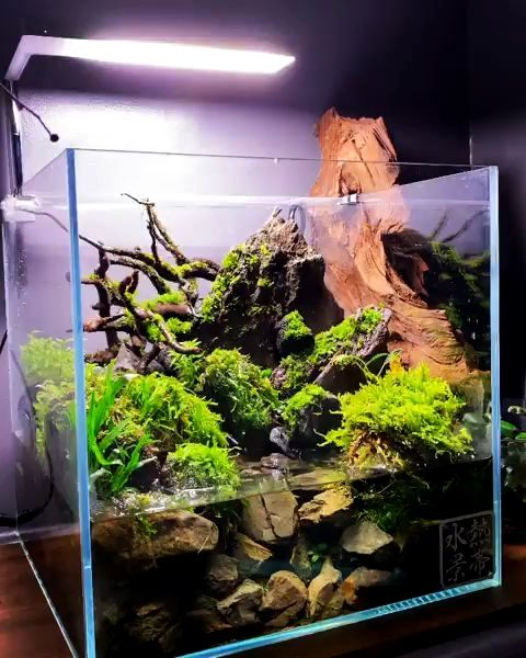 Natural Tree Trunk Driftwood Aquarium Fish Tank Reptile Plant Wood Decor S//M US