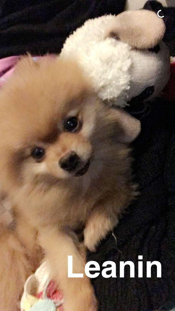 Chanel West Coast Dog Weezy Cute Animals Pinterest