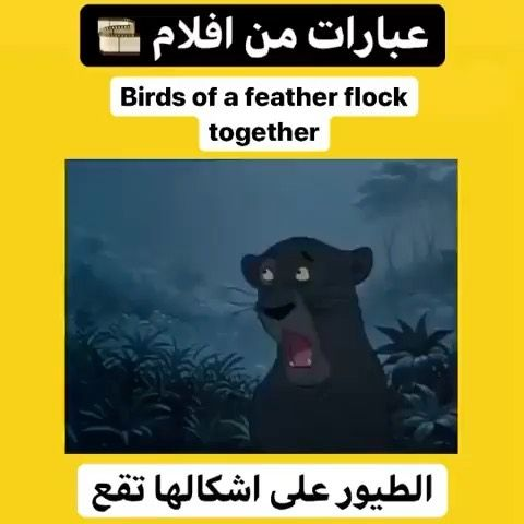 تعلم اللغة الانجليزية S Instagram Video لايك تعليق وشكرا 3nglish L صفحة احمد الغالي دروس ع In 2020 Bird Feathers Playbill