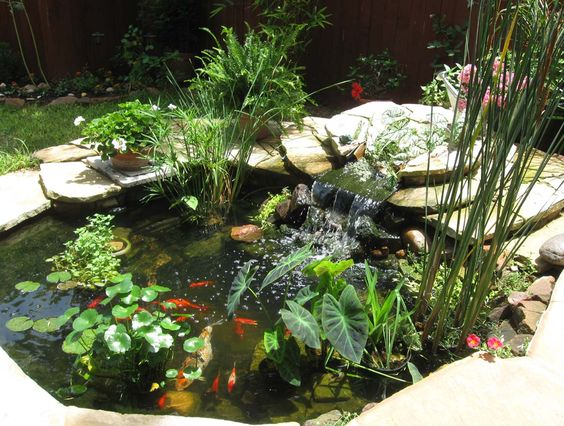 Variety of ponds plants including elephant ear which will for Outside pond plants