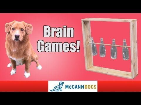 Homemade Brain Games Toy For Your Dog Youtube Brain Games