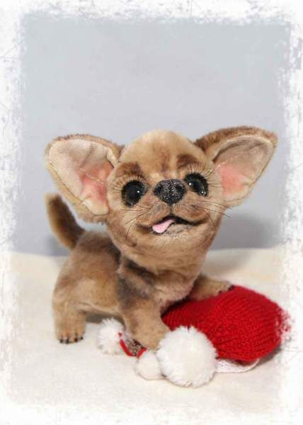 Mika the chihuahua puppy by By Jelena K. | Bear Pile