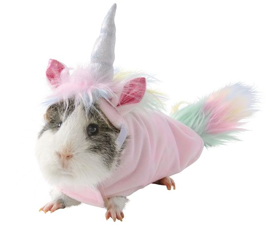 PetSmart Just Revealed an Unbelievably Adorable Line of Guinea Pig Halloween Costumes