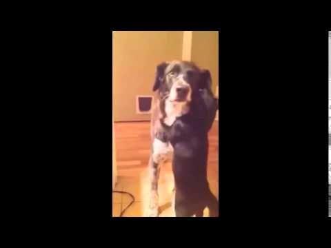A reação adorável de um gato ao rever seu amigo cão que ficou fora por 10 dias  Quem diz que cão e gato não podem se dar bem, está bastante enganado (ainda bem!), assim como espécies que geralmente associamos a inimizades, o cão e gato pode sim ser bastante amigos.  O cão Bow-z esteve ausente por 10 dias, e quando entrou em casa, teve uma recepção mais que calorosa de seu amigo Jasper, e que nos rendeu esse vídeo adorável e emocionante. Vejam: