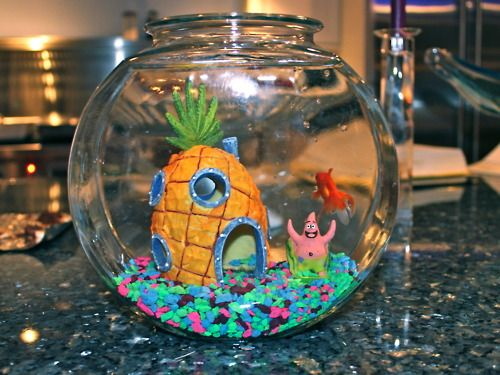 Spongebob fish tank lol cute it 39 s not pictured here but for Cute fish tanks