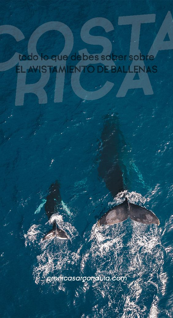 tour de ballenas en Uvita, Costa Rica