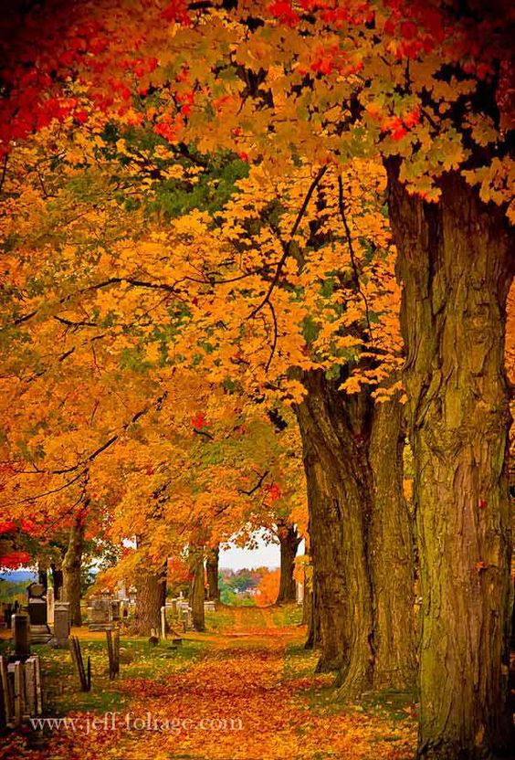 Fall Leaves with Tree-Lined Street | Tree lined road with fall foliage - New England fall foliage