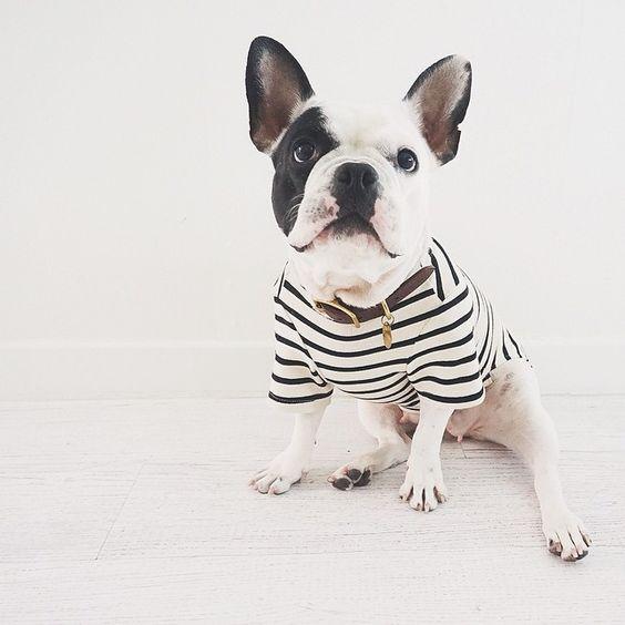ㅣㅣ  Look at this super cute stripe top #fallinlove #woofyou #muah