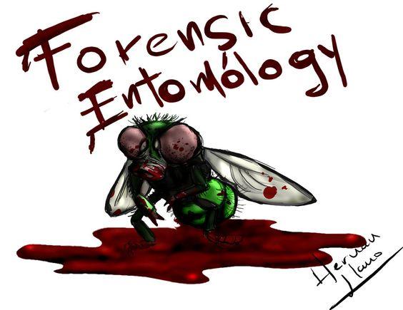 Forensic Entomology Forensic Entomology Pinterest Forensics - entomology scientist resume