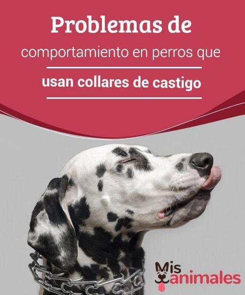 Tipos De Collares De Castigo Para Perros Pin En Conoce A Tu Perro