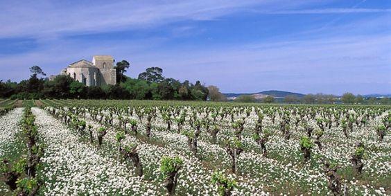 Cathédrale Saint-Pierre de Villeneuve-lès-Maguelone - Hérault le Languedoc