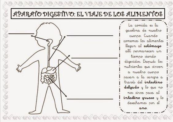 Dibujo Aparato Digestivo Para Colorear Imprimir: Manualidades Para Infantil Del Aparato Digestivo