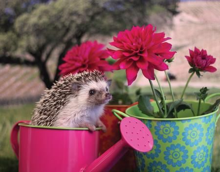Everything's comin up hedgehogs... Photo by Diane Modafferi — National Geographic Your Shot: