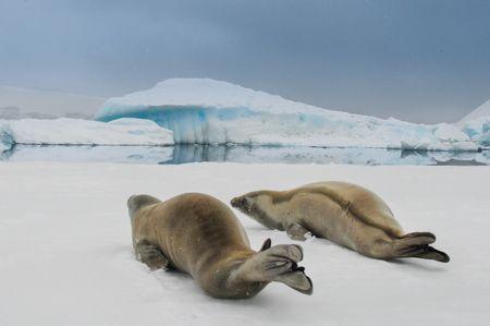 summer night in Antarctica  Photo by Jørn Allan Pedersen -- National Geographic Your Shot