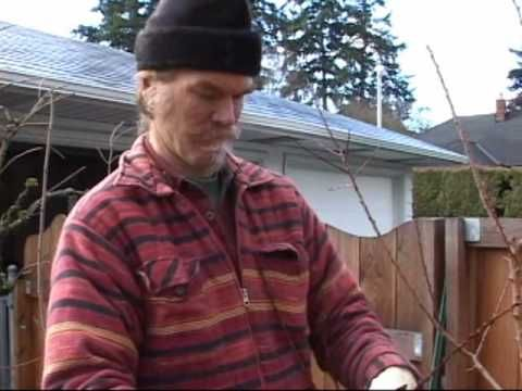 Bright Neighbor Fruit And Nut Tree Pruning Training Video   -  https://www.youtube.com/watch?v=VB8y5fKLzS8&list=PLSB9TYTbRkVO6P7V5Vg6czjcbrVZ2CXaX&index=14