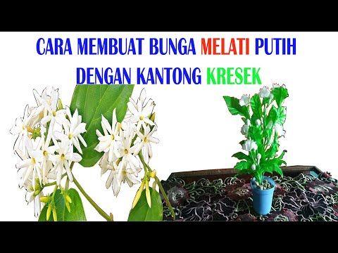 How To Cara Membuat Bunga Melati Putih Dari Daur Ulang Plastik Youtube Bunga Bunga Dahlia Daur Ulang