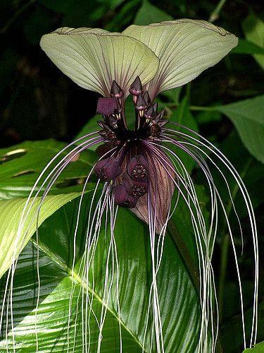 https://flic.kr/p/5iHgqo   no idea   A Saturday morning at Leu Gardens Orlando   Orchid?