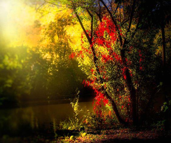 Colored Light Of The Fall de Lucian Olteanu sur Art Limited