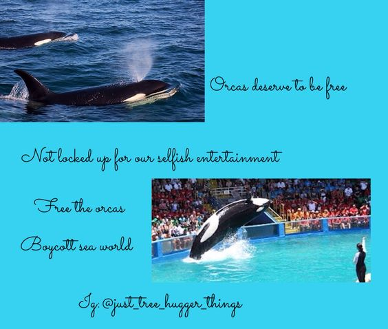 Boycott sea world these precious babies are not for our stupid entertainment they deserve a voice they need to be HEARD