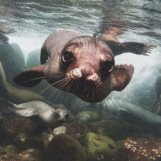 12 Amazing Photos To Celebrate World Ocean Day - INK361 Blog ocean_magazine