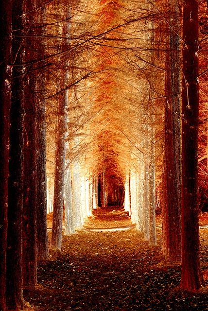 Amber ambiance whereby upon entering one becomes curious and then the frost bitten trees shed light upon the pathway.  The passage creates a warm sense of mind, a gentle breeze, an instrumental feeling of bliss.