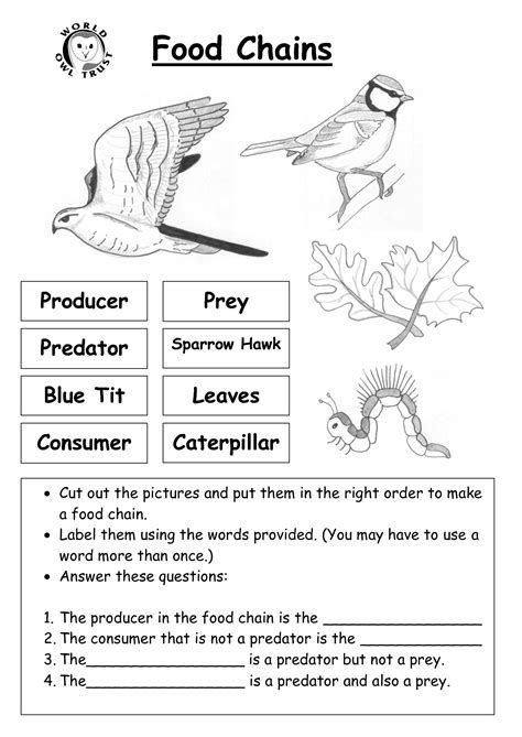 Student Activity Sheet Food Web Yahoo Search Results Food Web Worksheet Food Chain Worksheet Food Chain