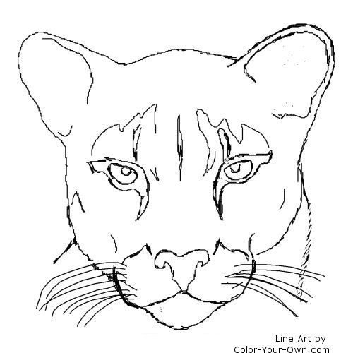 Coloring Pages Animals Realistic Lion : Cougar puma mountain lion catamount my coloring