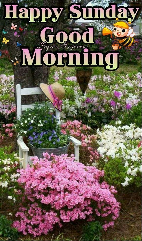 Garden Good Morning Happy Sunday With Images Good Morning