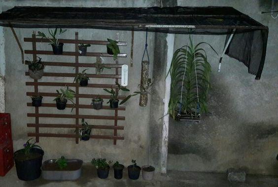 Jardim orquídeas