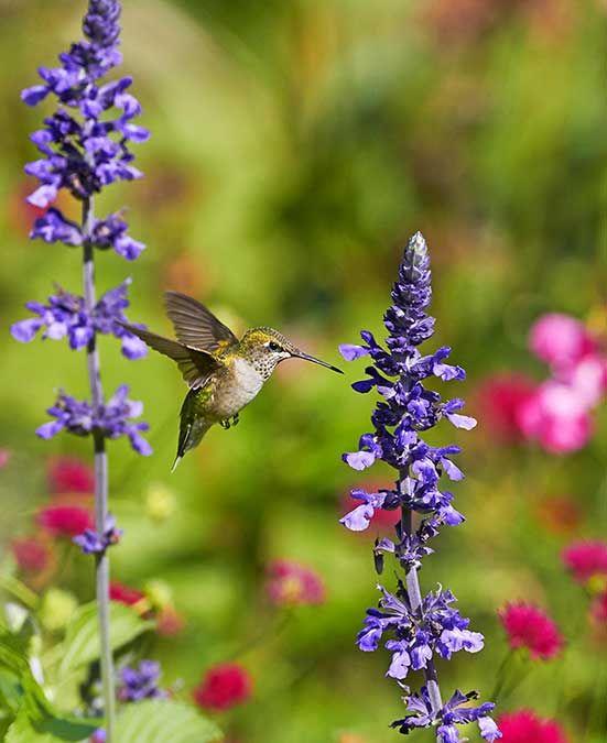 10 Flowers Hummingbirds Love Birds Blooms Hummingbird Plants Flowers Hummingbirds Like Attract Wild Birds