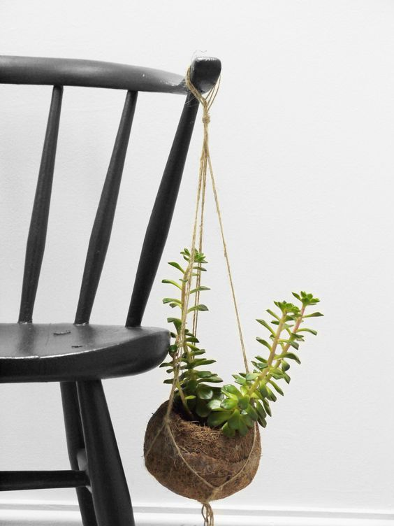 Black Ercol Cow Horn with hanging succulent