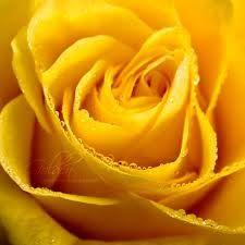 imagens douradas - Pesquisa Google