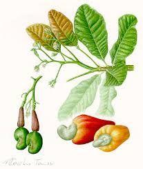 desenho botanica