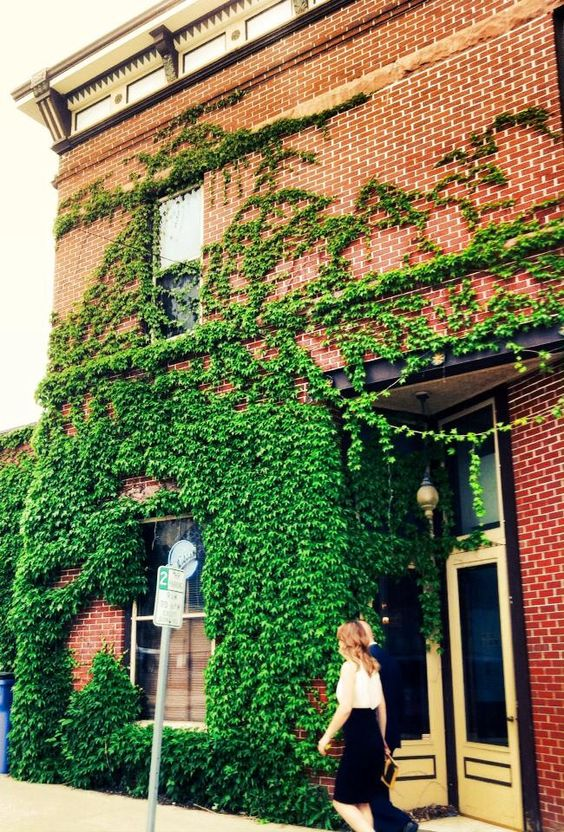 hanging pLants in Burlington..LoveLy !
