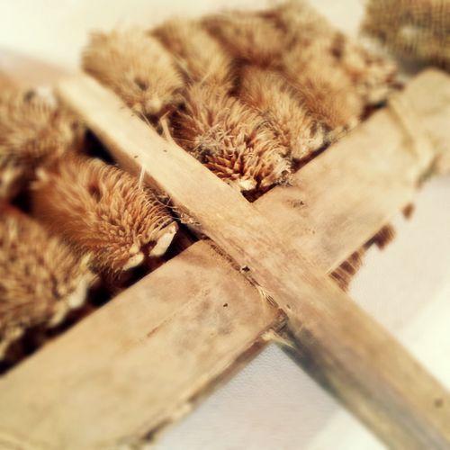 """Las """"perchas de cardones"""" se usaban para sacarle el pelo a las mantas de lana para que fueran bien calentitas. #BatanMuseo #ValDeSanLorenzo"""