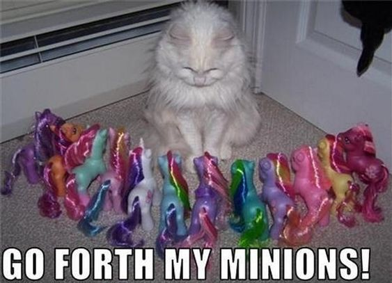 50 Funny Animal Pictures - Snappy Pixels