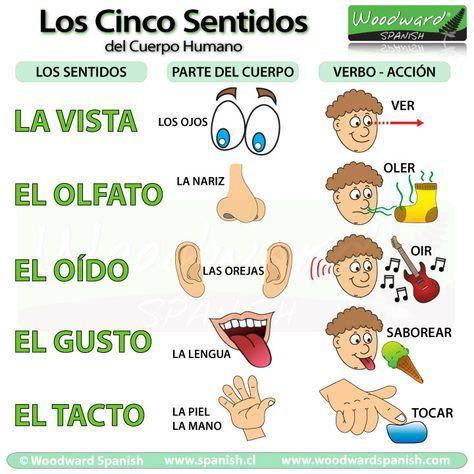 Los cinco sentidos del cuerpo humano - la vista, el olfato, el oído, el gusto, el tacto.