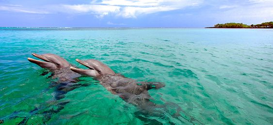 Swim with dolphins in Roatan, Honduras.
