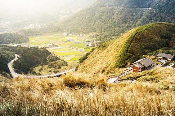 Hoa cỏ Lau khắp núi