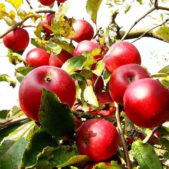 Ich liebe den Herbst  die ganzen tollen Früchte die es zu kaufen gibt die regionalen Früchte die man sich einfach von den Bäumen und Sträuchern mopsen kann und natürlich die wunderschönen Farben der Bäume. Es wird zwar jetzt kalt und ich bin eine absolute Frostbeule aber wenn wir ehrlich sind freuen wir uns doch alle unsere neu geshoppten Herbstklamotten anzuziehen und uns an den dunkleren Tagen mit einer Tasse Tee unter die Decke zu kuscheln  Was ist eure liebste Jahreszeit?…
