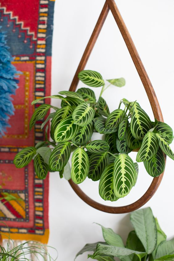 "Patterned plants: Houseplants, like the popular prayer plant, go beyond green with vibrant, patterned foliage and flashes of color (saves for ""patterned plants"" +533%)"